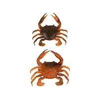 Przynęty gumowe 3D Manic Crab